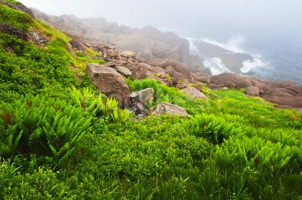 Zdjęcia stock: Wybrzeża · nowa · fundlandia · sceniczny · widoku · mglisty