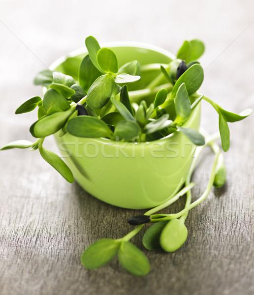 Photo stock: Vert · tournesol · tasse · organique · jeunes · nature