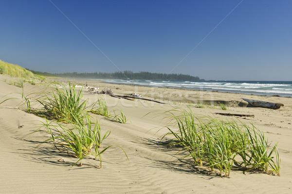海 海岸 リム 公園 カナダ 砂 ストックフォト © elenaphoto