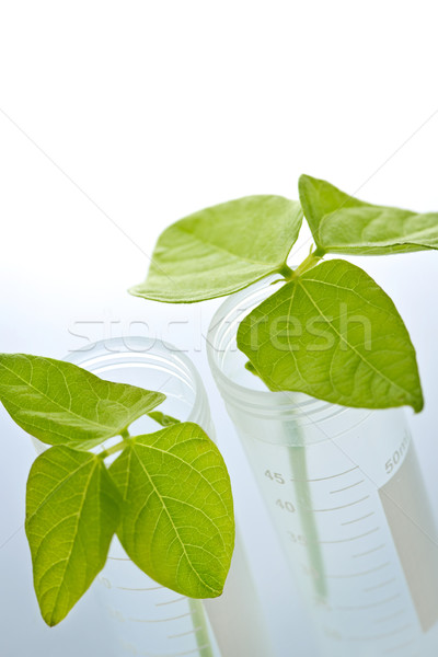 GM plant seedlings in test tubes Stock photo © elenaphoto