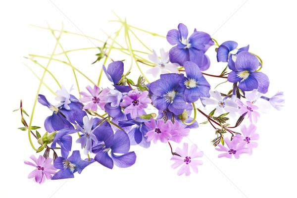 Lentebloem arrangement paars mos roze lentebloemen Stockfoto © elenaphoto