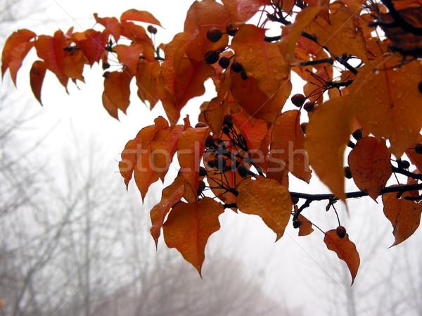 Foggy fall Stock photo © elenaphoto