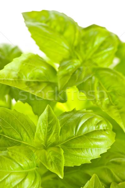Green basil close up Stock photo © elenaphoto