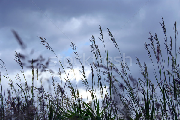 Sera erba grigio cielo blu cielo Foto d'archivio © elenaphoto