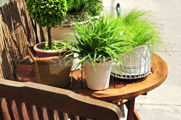 Potted green plants Stock photo © elenaphoto