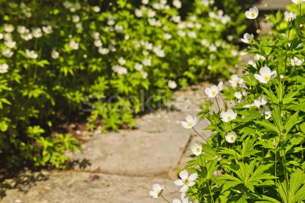 Wildflower garden Stock photo © elenaphoto