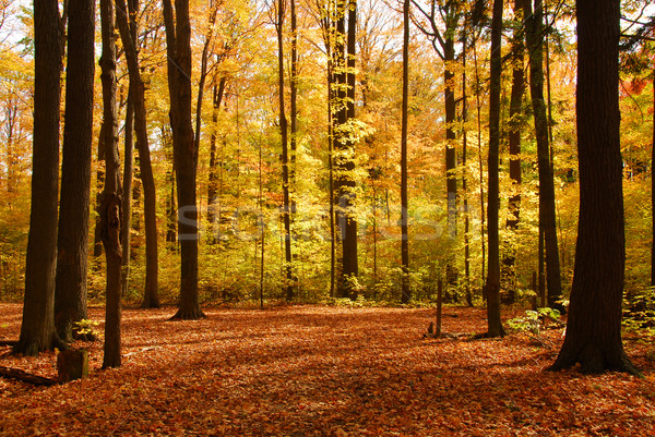 Fall forest landscape Stock photo © elenaphoto