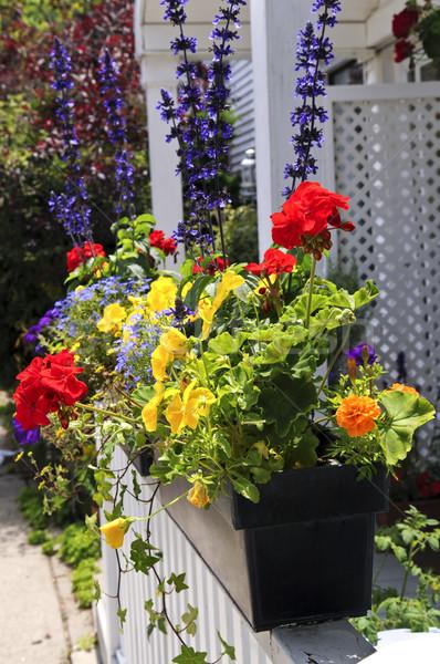 Flower box Stock photo © elenaphoto