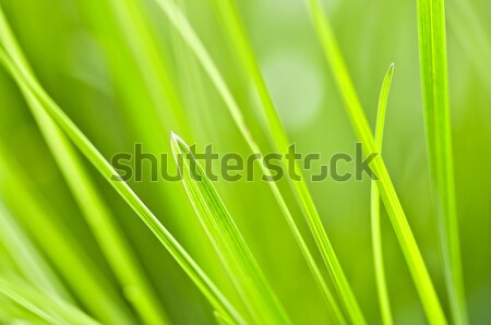 Green grass background Stock photo © elenaphoto