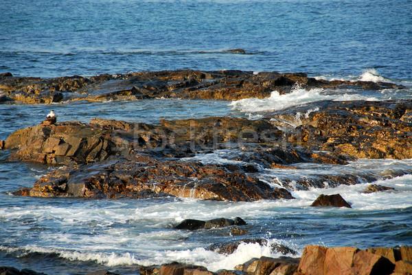 Rocce Ocean onde costa Maine USA Foto d'archivio © elenaphoto