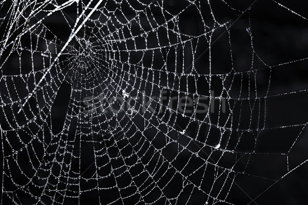 Spider web with dew Stock photo © elenaphoto