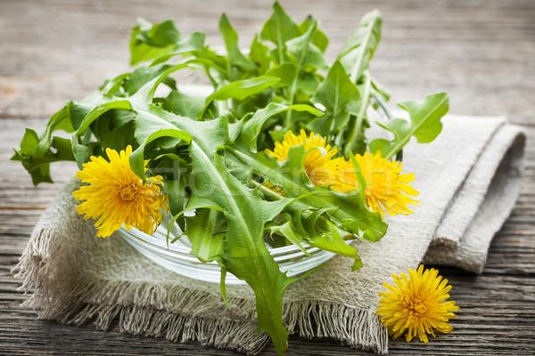 Dandelions greens and flowers Stock photo © elenaphoto