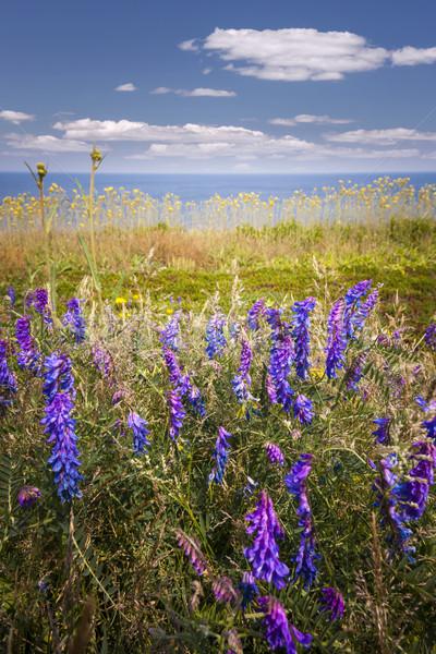 Flores silvestres oceano costa Canadá céu Foto stock © elenaphoto