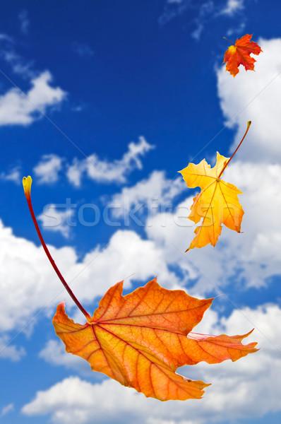 Foto stock: Cair · bordo · folhas · queda · blue · sky · natureza