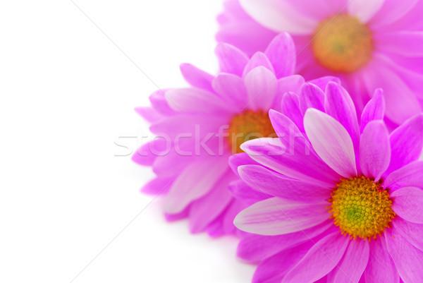 Stok fotoğraf: Pembe · çiçekler · beyaz · çiçek