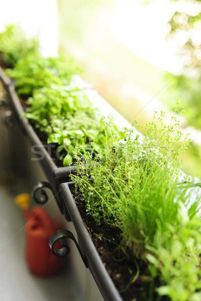 Erkély gyógynövény kert friss gyógynövények növekvő ablak Stock fotó © elenaphoto