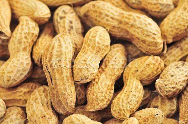 Peanuts Stock photo © elenaphoto