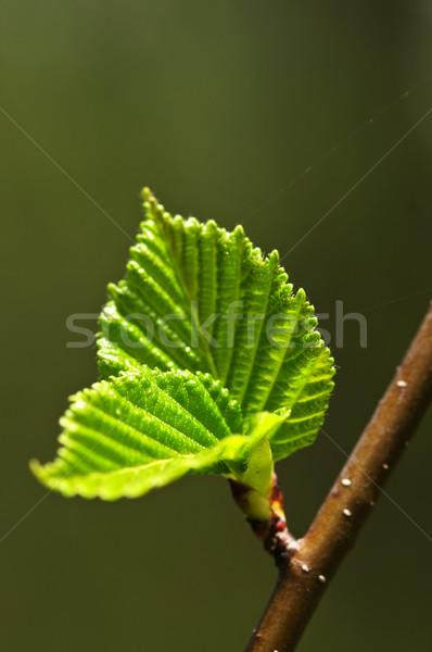 緑 春 葉 新生活 クリーン 環境 ストックフォト © elenaphoto
