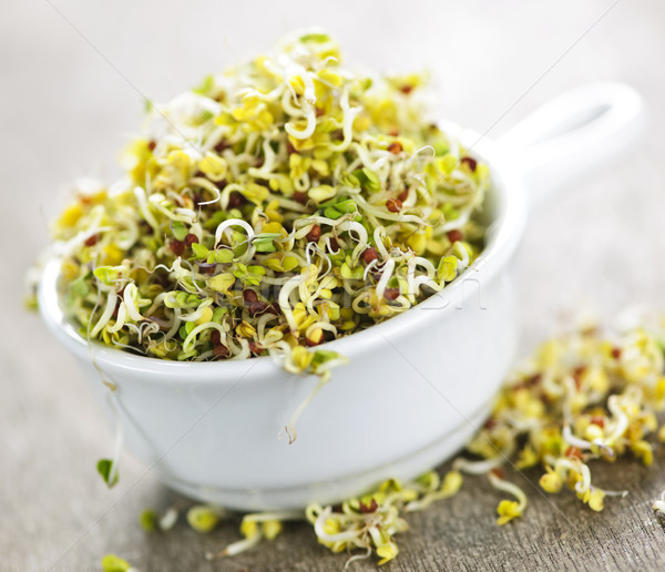 Alfalfa sprouts in a cup Stock photo © elenaphoto
