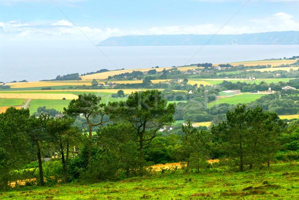 Agricultural landscape Stock photo © elenaphoto