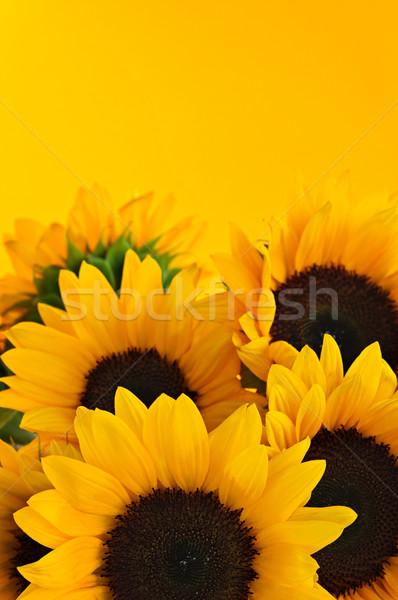 ストックフォト: ひまわり · 花束 · ヒマワリ · 花 · 黄色 · 太陽