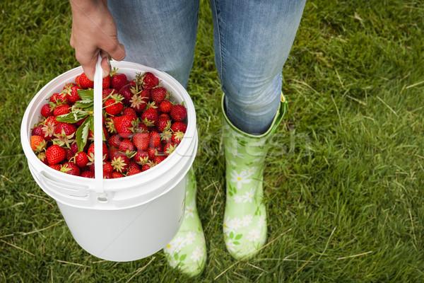 Woman holding pail of fresh strawberries Stock photo © elenaphoto