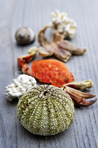 Sea treasures Stock photo © elenaphoto