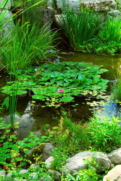 Tavacska természetes kő vízi növények víz Stock fotó © elenaphoto