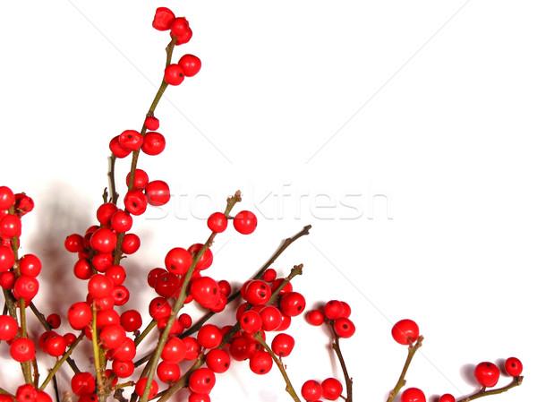 Stockfoto: Rood · christmas · bessen · witte · bes · boom