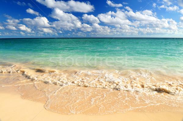 Tropical beach Stock photo © elenaphoto
