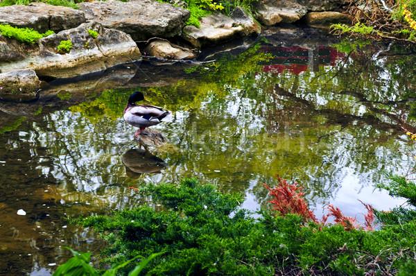 Pond in zen garden Stock photo © elenaphoto