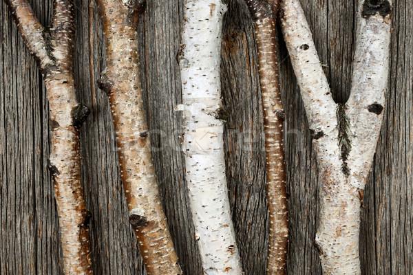 Brzozowy drzewo naturalnych drewna Zdjęcia stock © elenaphoto