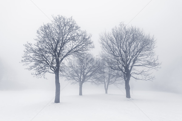 Winter trees in fog Stock photo © elenaphoto