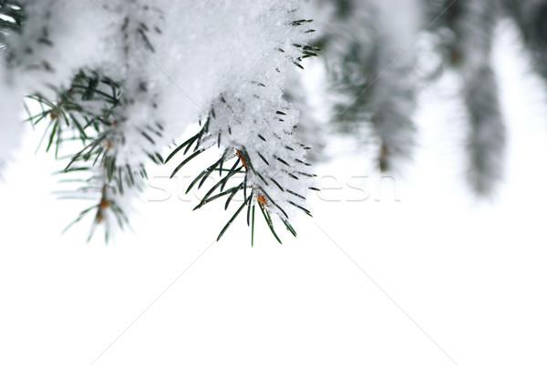 Foto d'archivio: Abete · rosso · rami · neve · inverno · albero · coperto