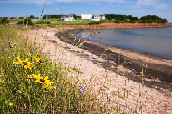 Isla del príncipe eduardo flores silvestres costa pueblo norte Foto stock © elenaphoto