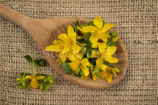 St. John's Wort flowers Stock photo © elenaphoto