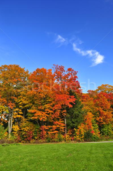 Autumn trees Stock photo © elenaphoto