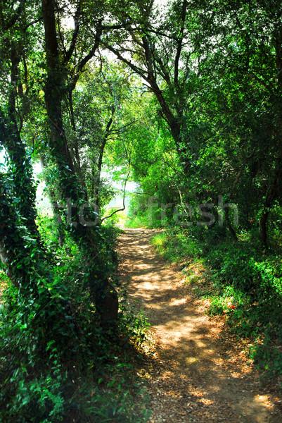 Forest path Stock photo © elenaphoto