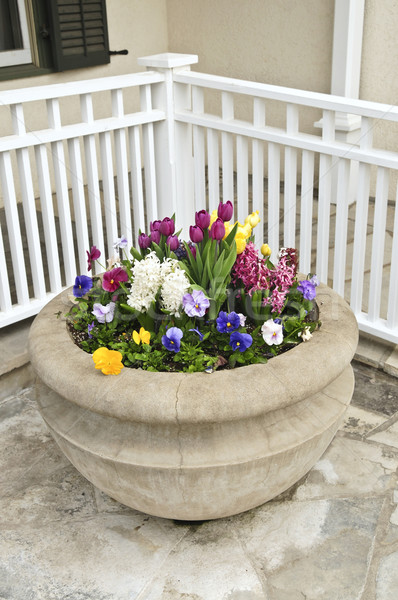 Stone planter with spring flowers Stock photo © elenaphoto