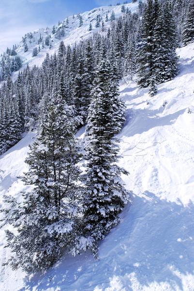 Ski tracks in mountains Stock photo © elenaphoto