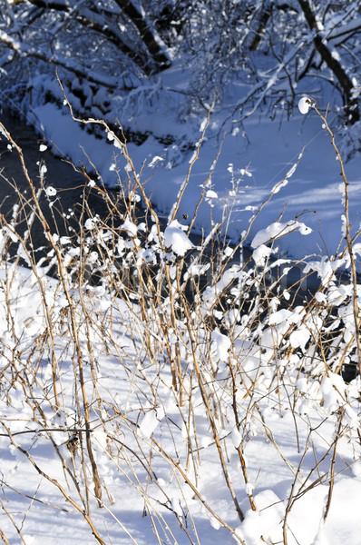 Winter landscape Stock photo © elenaphoto