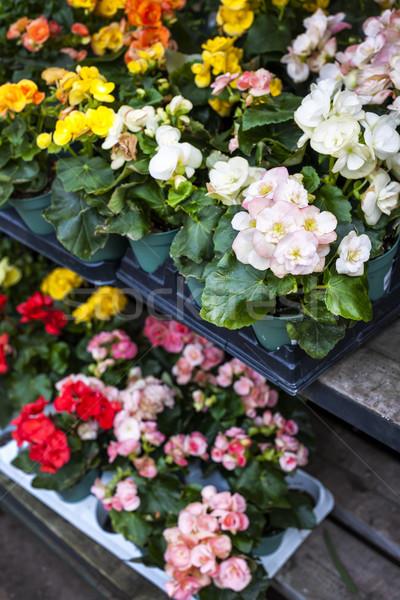 Virágok vásár faiskola növény bolt kert Stock fotó © elenaphoto