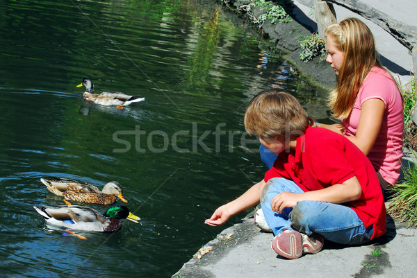 Children feeding ducks Stock photo © elenaphoto