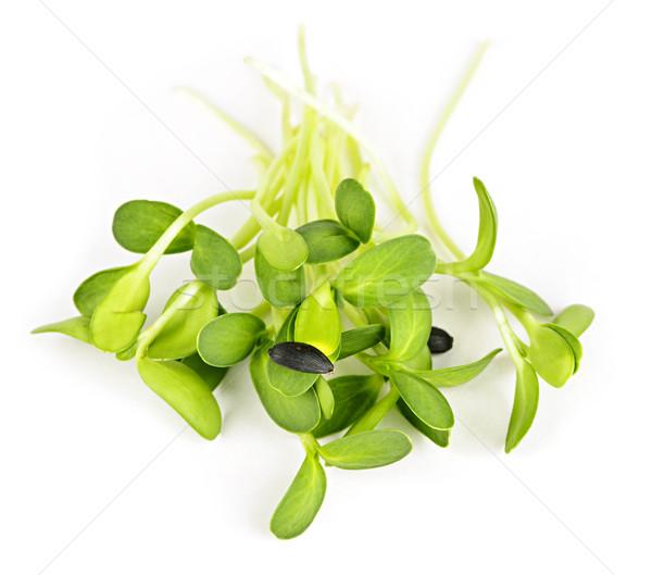 Stok fotoğraf: Yeşil · ayçiçeği · organik · genç · yalıtılmış · beyaz