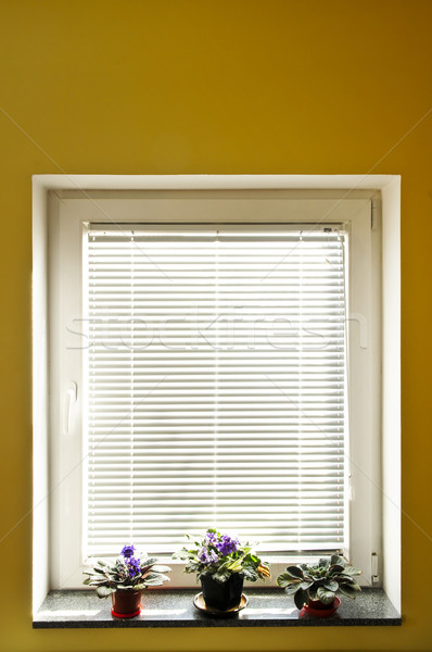 Window blinds Stock photo © elenaphoto