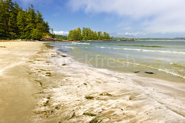 Costa oceano Vancouver ilha Canadá long beach Foto stock © elenaphoto