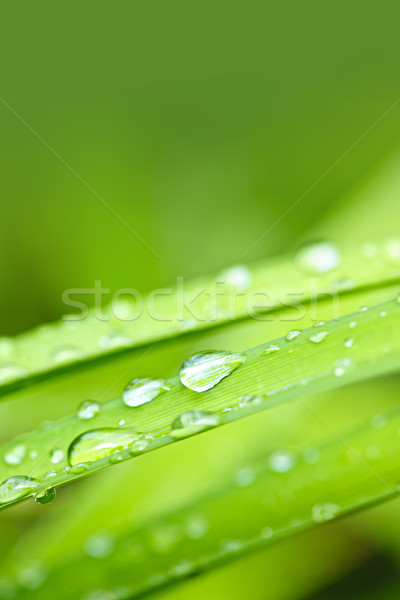 Water drops on grass blade Stock photo © elenaphoto