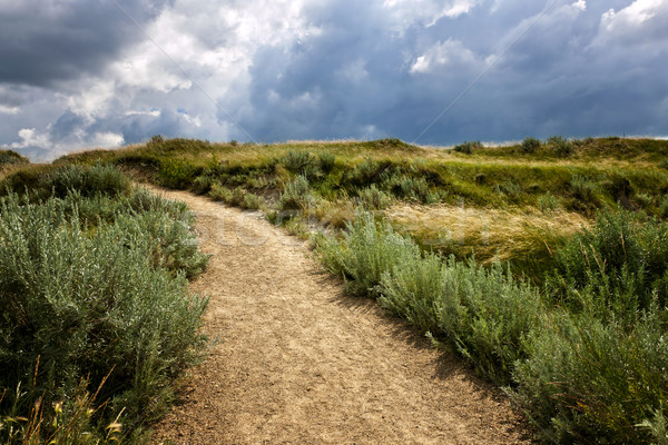 Trail in Badlands in Alberta, Canada Stock photo © elenaphoto