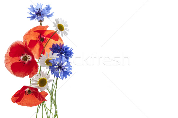 Wildflower arrangement Stock photo © elenaphoto