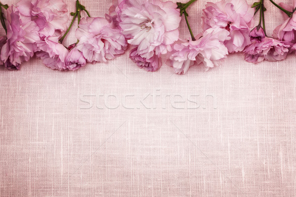 Cherry blossoms border on pink linen Stock photo © elenaphoto